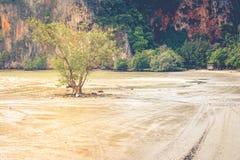 Osamotniony drzewny dorośnięcie w morzu z halnym tłem Zdjęcia Stock