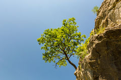 Osamotniony drzewny obwieszenie od skał w górach Zdjęcia Royalty Free