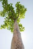 osamotniony drzewny oddolny widok zdjęcia royalty free