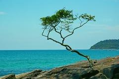 Osamotniony Drzewny Tropikalny Sea Cliff Tropikalny krajobraz zdjęcia stock