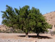 osamotniony drzewo Obrazy Stock