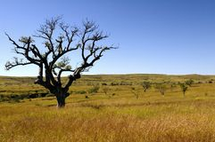 osamotniony drzewo Zdjęcie Royalty Free