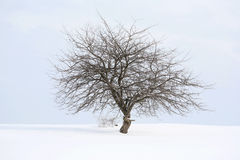 Osamotniony drzewo Zdjęcie Stock