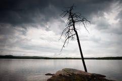 osamotniony drzewo Obraz Royalty Free