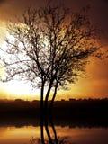 osamotniony drzewo Zdjęcia Stock