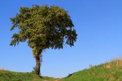 Osamotniony drzewo obraz stock