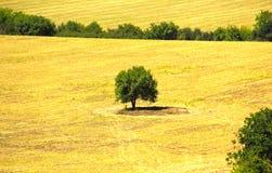 Osamotniony drzewo, Bułgaria Zdjęcia Stock