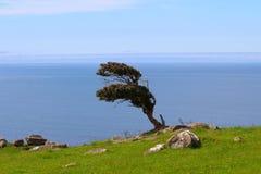 Osamotniony drzewo Catlins, Południowa wyspa, Nowa Zelandia fotografia stock