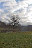 Osamotniony drzewo na bagnie Fotografia Royalty Free