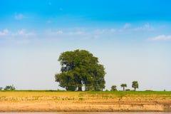 Osamotniony drzewo na banku rzeczny Irrawaddy, Mandalay, Myanmar, Birma Odbitkowa przestrzeń dla teksta obraz stock