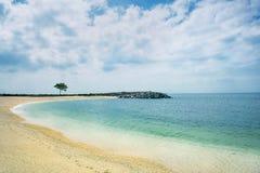 Osamotniony drzewo na brzeg marmurowy morze na słonecznym dniu w indyku Fotografia Stock