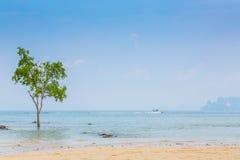 Osamotniony drzewo na Dennym tle zdjęcie royalty free