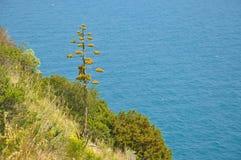 Osamotniony drzewo na Dennym tle Zdjęcie Stock