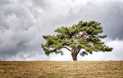 Osamotniony drzewo na horyzoncie Obrazy Royalty Free