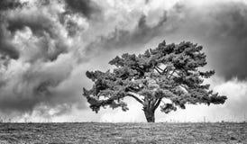 Osamotniony drzewo na horyzoncie Zdjęcie Royalty Free