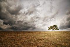 Osamotniony drzewo na horyzoncie Zdjęcia Stock