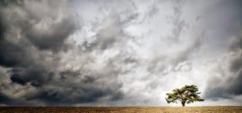 Osamotniony drzewo na horyzoncie Obraz Stock
