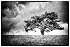 Osamotniony drzewo na horyzoncie Fotografia Stock