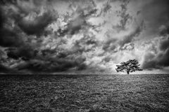 Osamotniony drzewo na horyzoncie Obraz Royalty Free