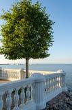 Osamotniony drzewo na kamiennym balkonie na dennym tle Zdjęcia Stock