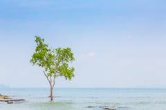 Osamotniony drzewo na morzu zdjęcia stock