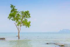 Osamotniony drzewo na morzu fotografia royalty free