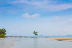 Osamotniony drzewo na morzu obrazy royalty free
