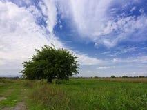 Osamotniony drzewo na niebieskim niebie Obraz Stock