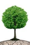 Osamotniony drzewo na planecie pękał odosobnionego na białym tle Zdjęcia Royalty Free
