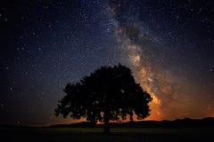 Osamotniony drzewo na polu pod milky sposobu galaxy Zdjęcia Royalty Free