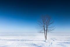 Osamotniony drzewo na równinie zakrywającej z śniegiem Obrazy Stock