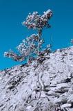 Osamotniony drzewo na skałach, infrared skutek zdjęcie royalty free