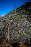 Osamotniony drzewo na skale Zdjęcie Royalty Free