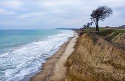 Osamotniony drzewo na stromym brzeg Czarny morze Zdjęcia Stock