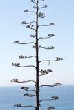 Osamotniony drzewo na tle morze Zdjęcie Royalty Free