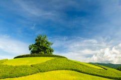 Osamotniony drzewo na wierzchołku wzgórze fotografia royalty free