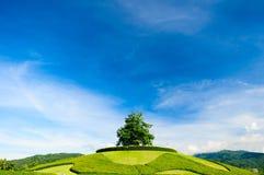 Osamotniony drzewo na wierzchołku wzgórze Obrazy Royalty Free