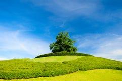 Osamotniony drzewo na wierzchołku wzgórze Fotografia Stock