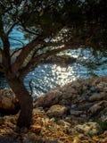 Osamotniony drzewo na wybrzeżu Zdjęcia Royalty Free