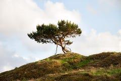Osamotniony drzewo Na wzgórzu Zdjęcie Stock