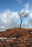 Osamotniony drzewo na wzgórzu z żółtą trawą i śniegiem obraz stock