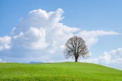 Osamotniony drzewo na zielonym wzgórzu, niebieskim niebie i bielu, chmurnieje obrazy stock