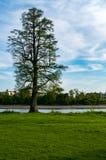 Osamotniony drzewo nad niebieskim niebem obrazy stock
