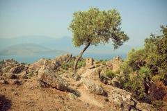 Osamotniony drzewo oliwne r na wzgórzu z dziejowymi ruinami Bizantyjski miasteczko, Turcja obraz royalty free