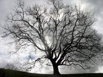 Osamotniony drzewo przeciw szaremu niebu Fotografia Royalty Free