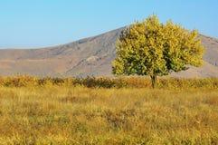 Osamotniony drzewo przed górą Fotografia Royalty Free