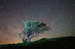 Osamotniony drzewo przy nocą Obraz Royalty Free