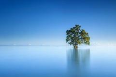 Osamotniony drzewo przy otwartym morzem z niebieskim niebem Obrazy Stock