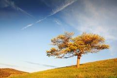 Osamotniony drzewo w łąkach i niebieskim niebie Obraz Stock