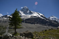 Osamotniony drzewo w górach Obraz Royalty Free